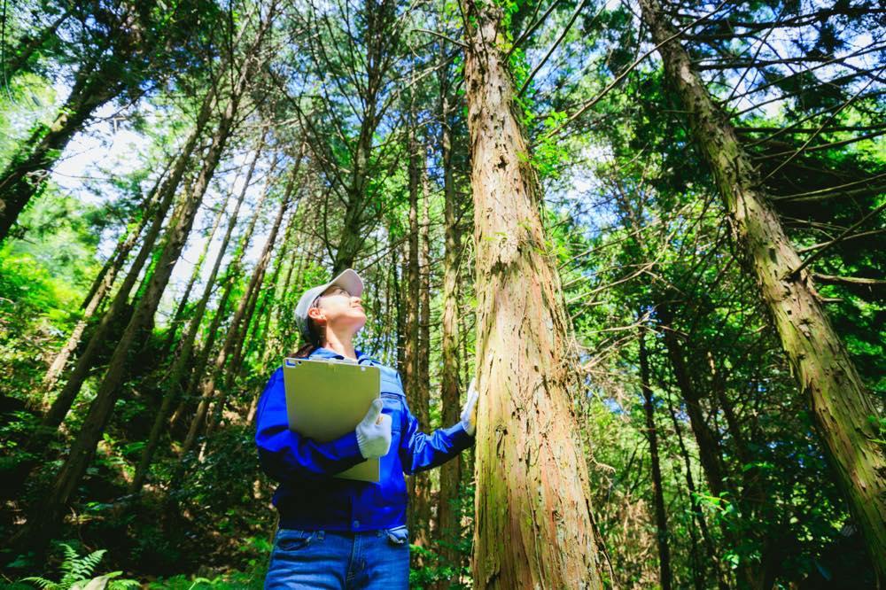 見 見 て 木 意味 を 森 を ず 「木を見て森を見ず」の意味と使い方・類語・反対語・用例・由来