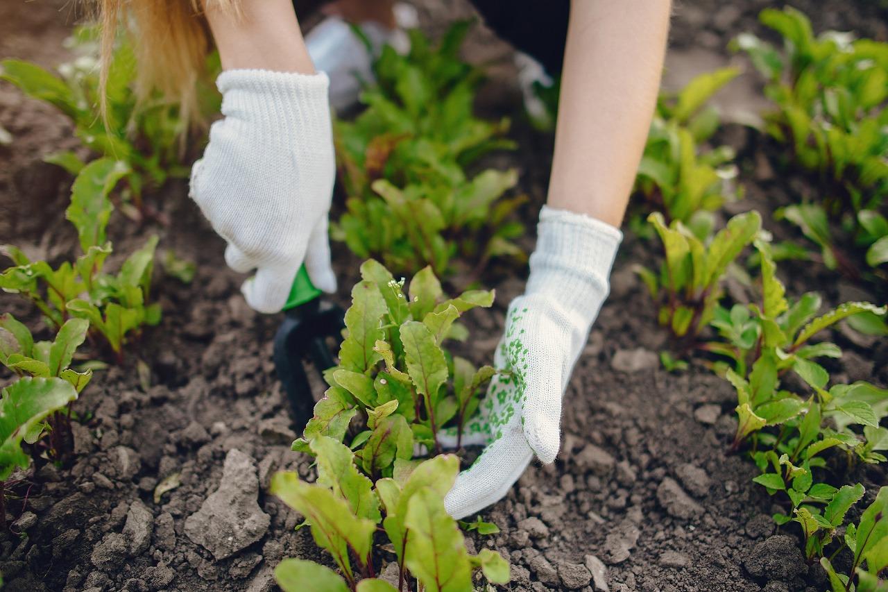 意味 葉 掘り 根 掘り