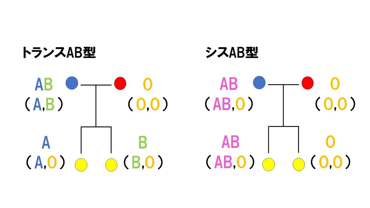 Ab 型 シス
