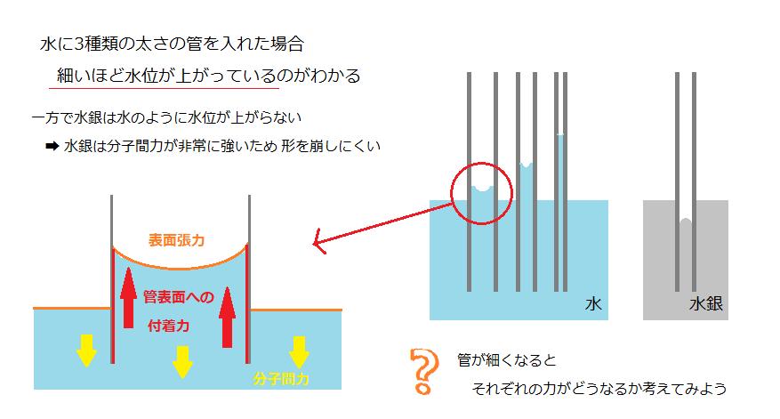 1-1.毛細管現象の仕組み