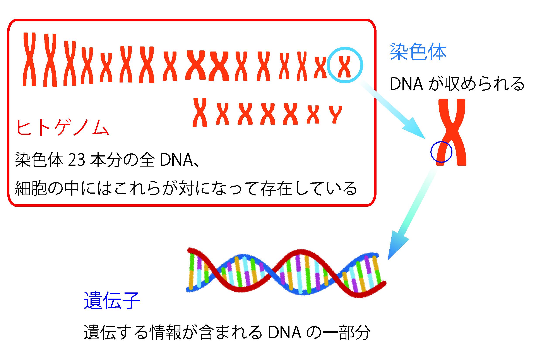 ゲノムとは